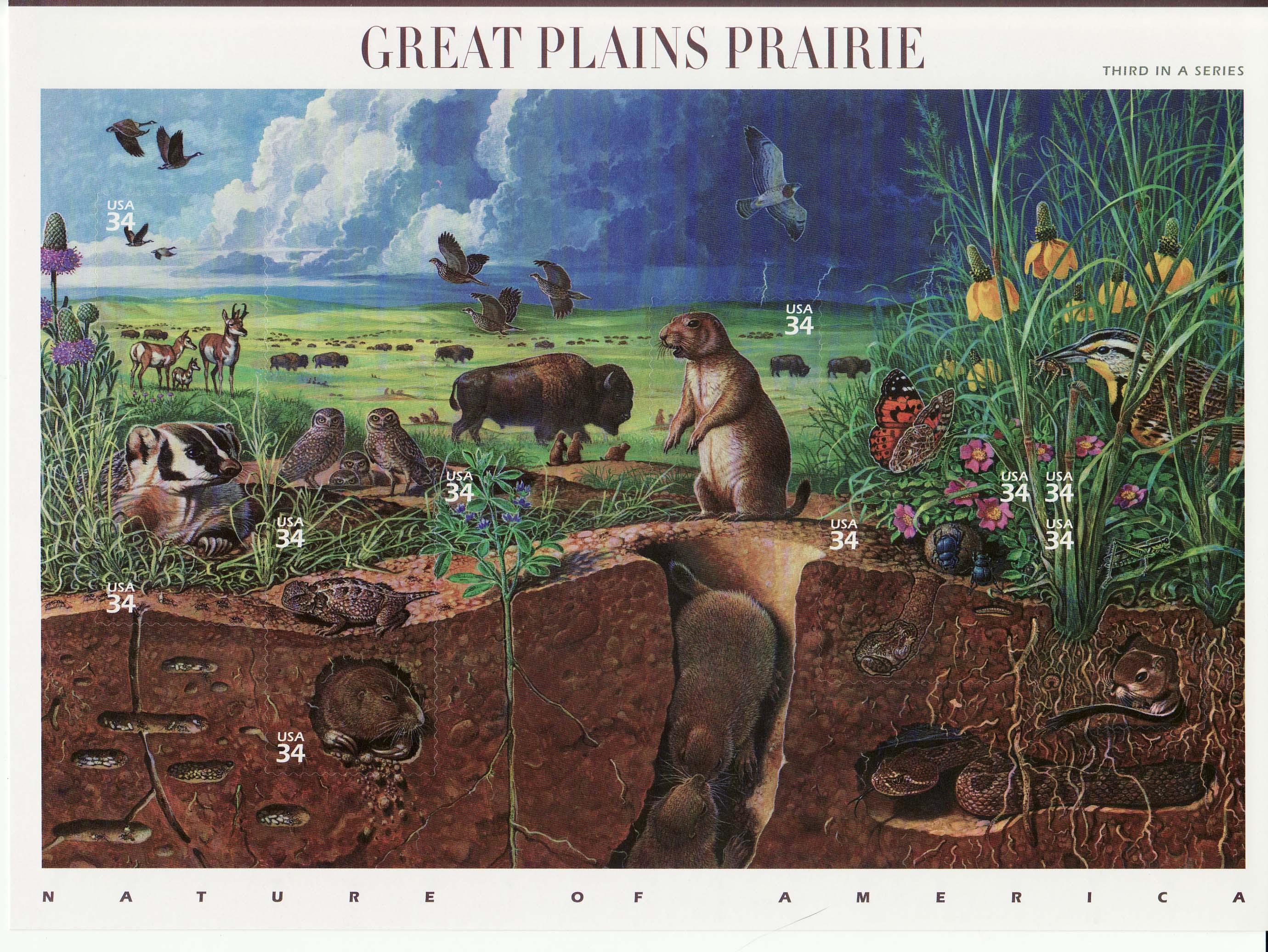 Risultati immagini per prairies ecosystem